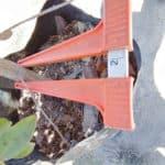 Prime-Trees-Cape-Town-Camphor Bush-Tree-Tarchonanthus camphoratus-50l-stem