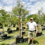 Prime-Trees-Cape-Town-Monkey Thorn-Tree-Vachellia galpinii-100l