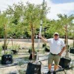 Prime-Trees-Cape-Town-Paperbark Thorn-Tree-Vachellia sieberiana-100l