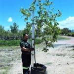 Prime-Trees-Cape-Town-Pecan-White-Stinkwood-Tree-Celtis-africana-100l